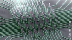 Image: Close-Up of the nanowire; Copyright: Integrated Electronics and Biointerfaces Laboratory, UC San Diego