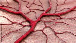 Image: Computer-generated image of an arborizing blood vessel; Copyright: panthermedia.net/Ugreen