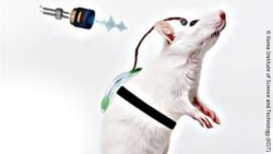 Image: animal model using the developed wireless wearable brain stimulation system; Copyright: Korea Institute of Science and Technology (KIST)