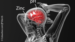 Image: Graphic of how Zinc influences the pH-regulation in the brain; Copyright: Colourbox.com/JP Morth
