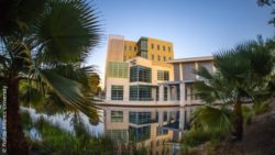 Image: hospital behind palm trees; Copyright: Florida Atlantic University