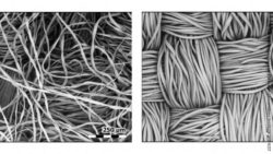 Image: Black-and-white images of two kinds of tissue fibers; Copyright: E.P. Vicenzi/Smithsonian's Museum Conservation Institute and NIST