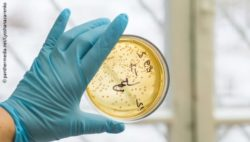 Image: A hand with a glove is holing a petri dish with bacterial cultures in it; Copyright: panthermedia.net/Lyoshanazarenko