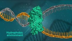 Image: Illustrated DNA string; Copyright: Yen Strandqvist/Chalmers University of Technology