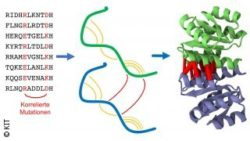 Image: A graphic showing a correlation between errors in DNA and protein structure; Copyright: KIT