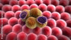 Image: Graphical rendering of antibodies attacking cancer cells; Copyright: panthermedia.net/Ugreen