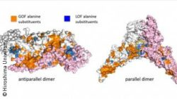 Image: Structural models of two proteins; Copyright: Hiroshima University